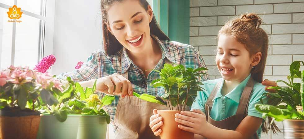 positive-energy-plants-that-will-boost-your-mental-health