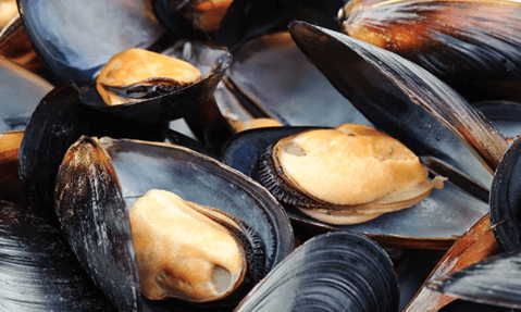 Mussels great food to fight depression