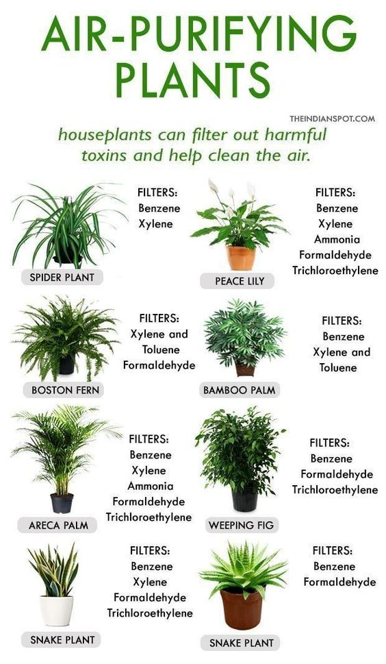 list of air purifying plants indoor and outdoor