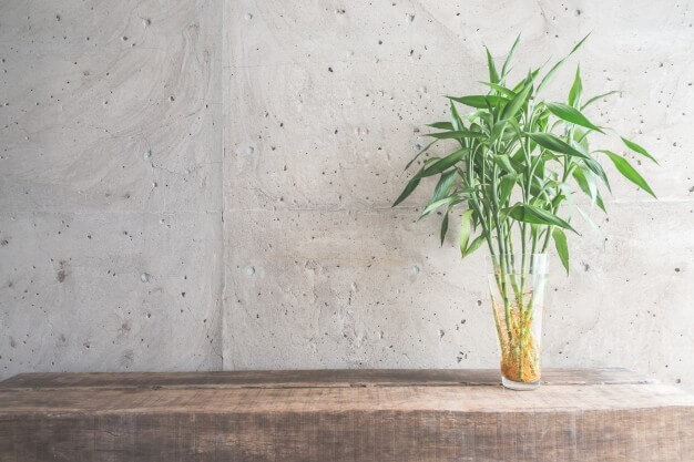 bamboo Plant for positive energy