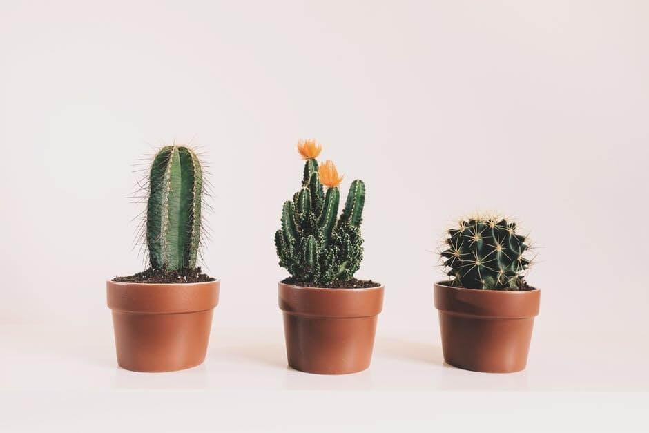 cactus a positive plant