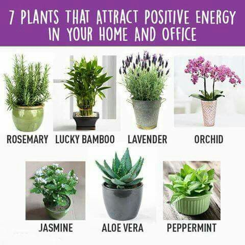more positive vibe plants indoor and outdoor