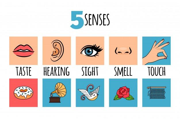 5 sense