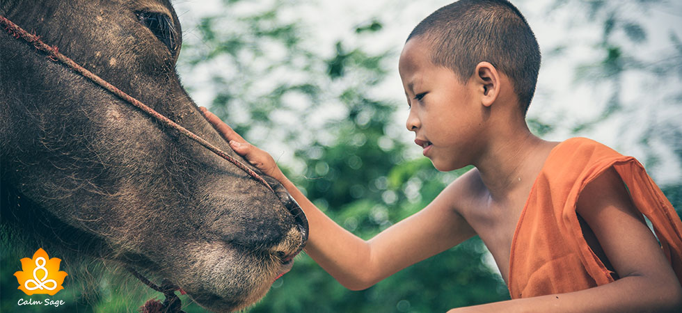 Compassion--The-Ultimate-Tool-to-Improve-Your-Quality-of-Life