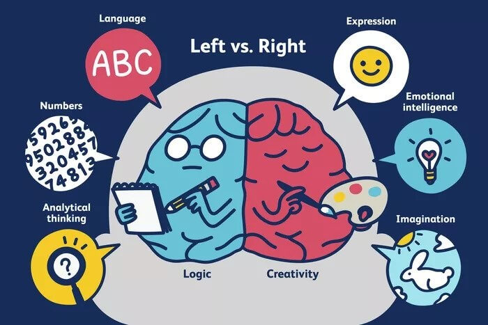 Left brain and right brain difference