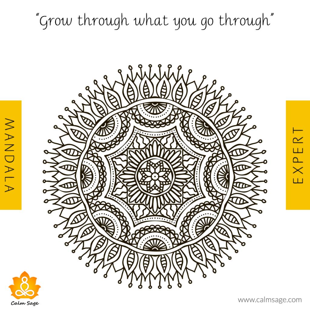 expert - Grow Through What you go Through