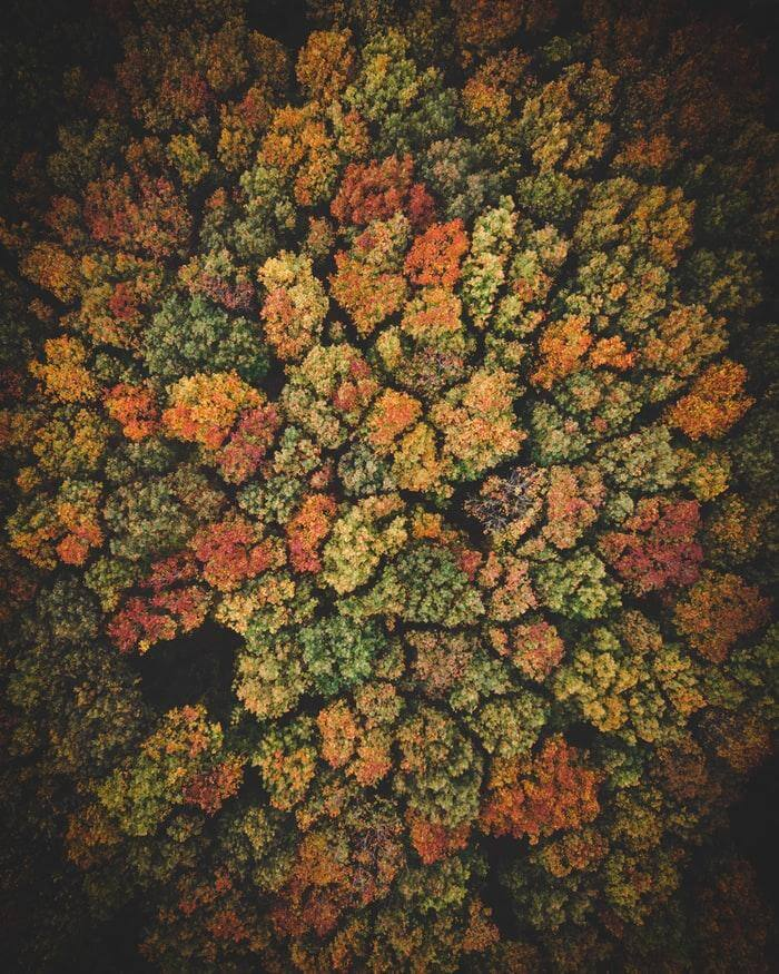 Colors and natural fractals are a complete win win