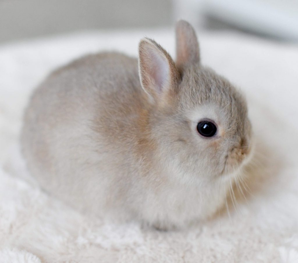 Is this baby bunny even real