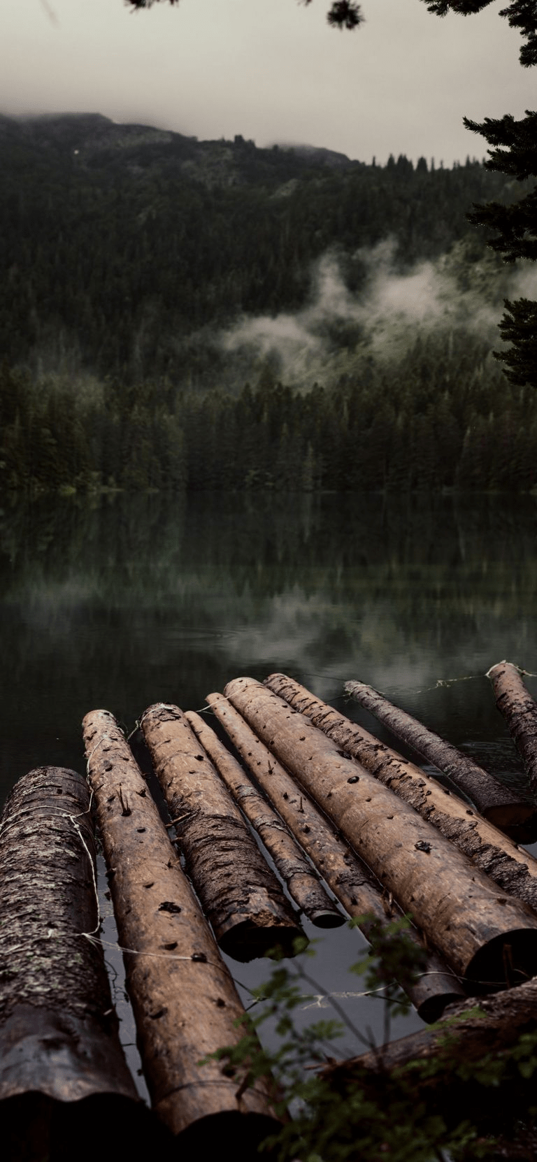 Logs Submerged In Water, calming background