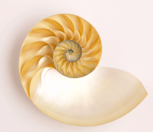 Seashells could be this eye pleasing