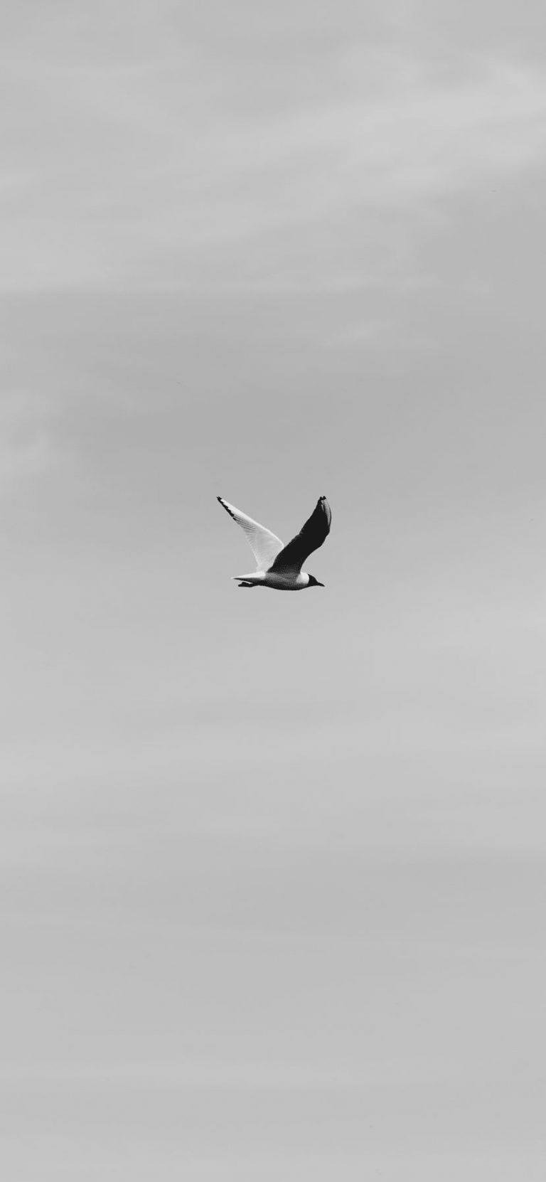The Flight Of A Bird, calm wallpaper for iphone