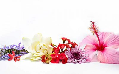 choose-the-flower-and-know-your-personality