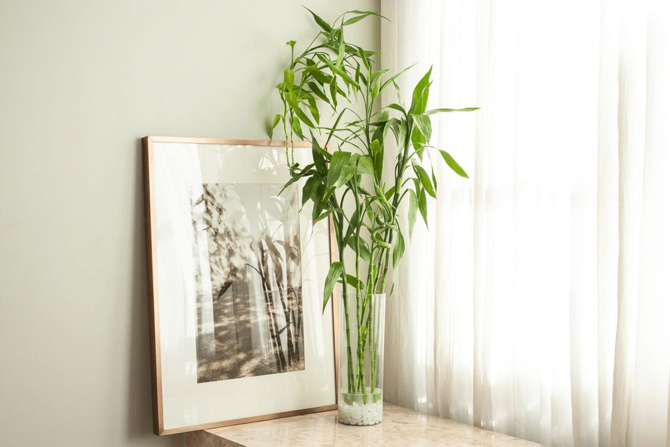 get Bamboo Plant