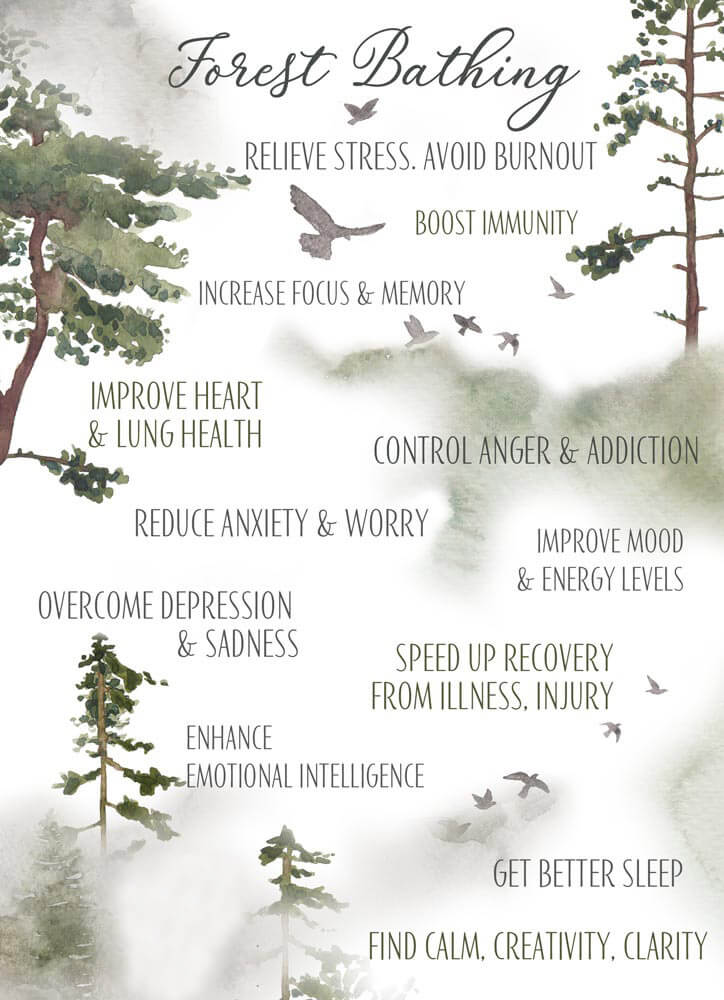 Benefits of Forest Breathing