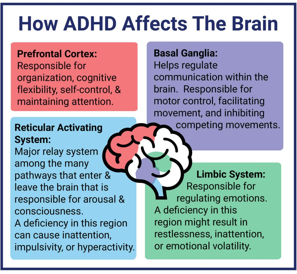 How-ADHD-Affects-The-Brain