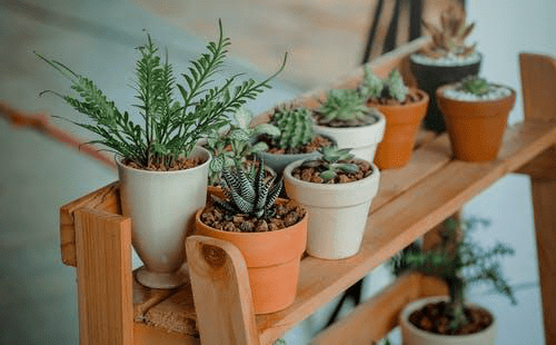 Positive Energy Plants