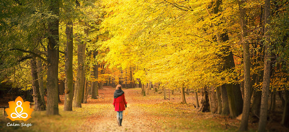 complete guide about forest bathing