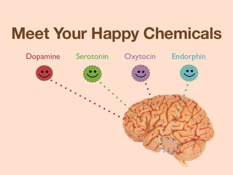 meet your happy hormons