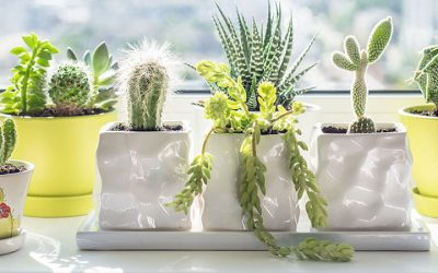 Boost Positivity With cactus Plant