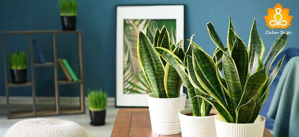Complete Guide for snake plants