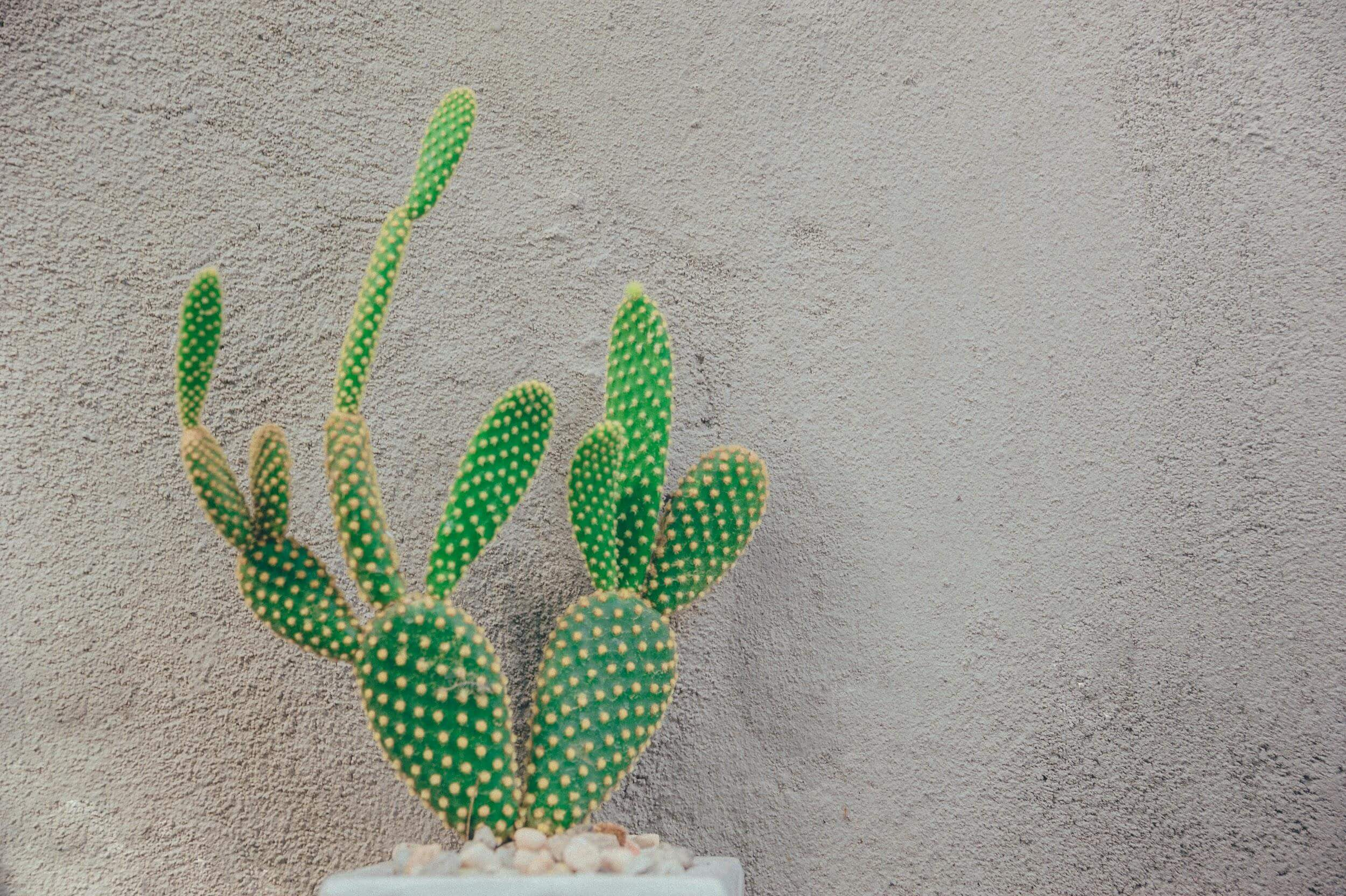 How to Take Care of a Cactus Plant