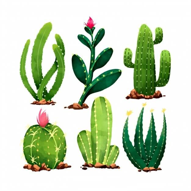 Types of Cactus Plants