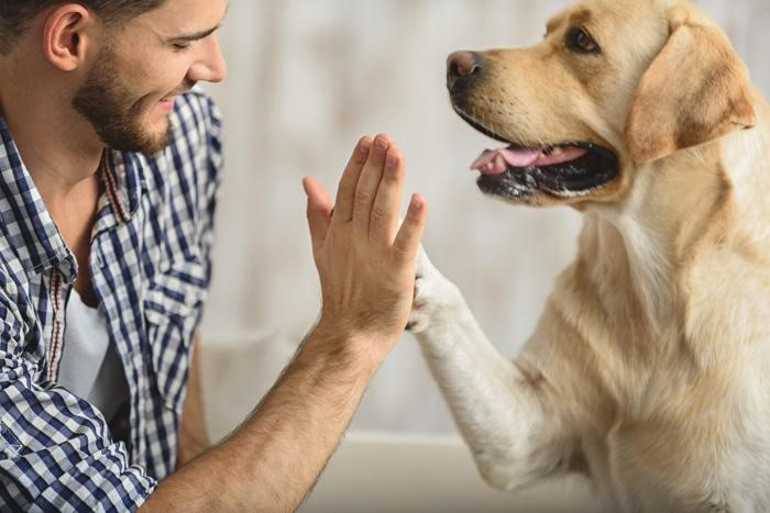 Pet therapy help in depression