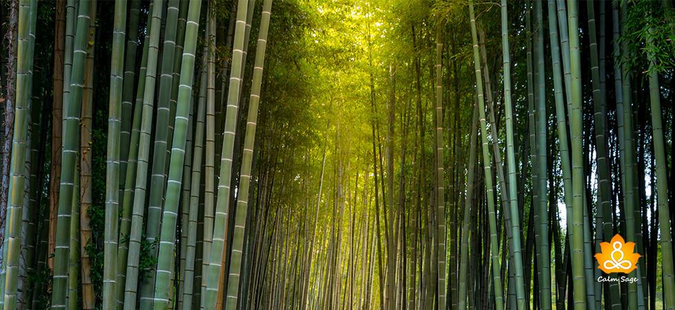Spiritual Teachings of trees