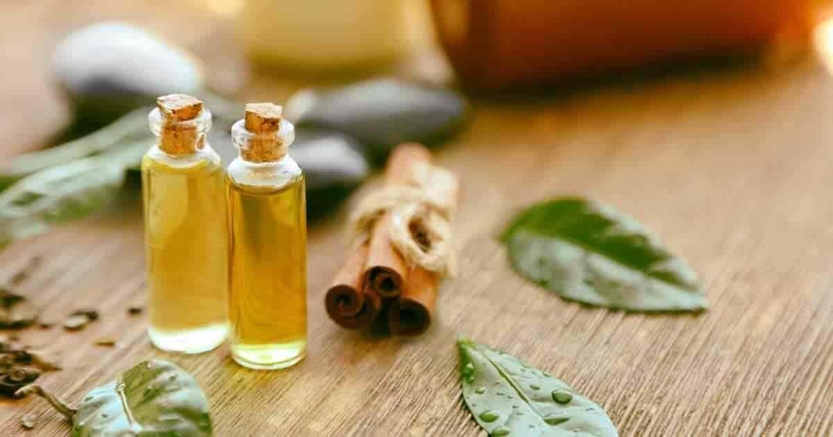 Tea Tree, Medicinal Plants And Their Benefits