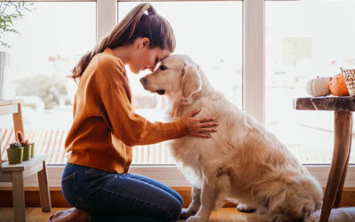 Understanding Pet Therapy
