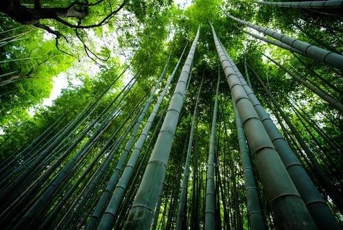 great spiritual learning from oak
