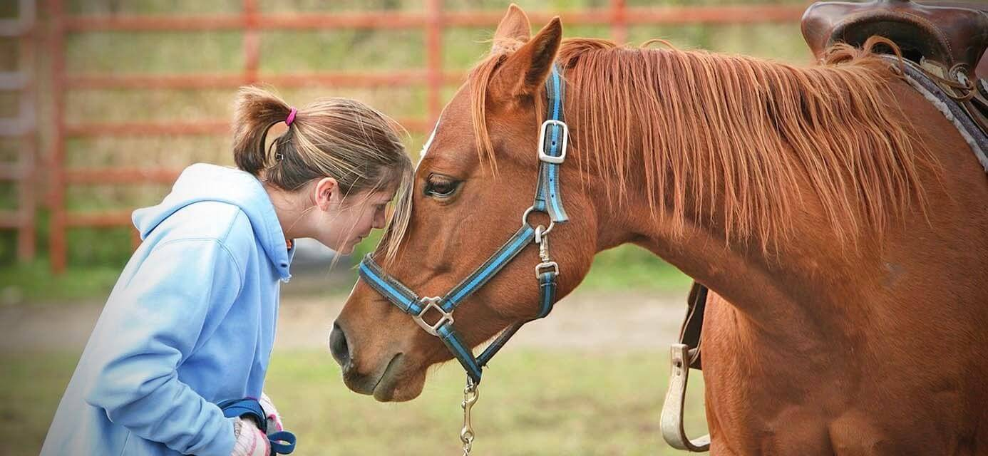 hourse - Equine-assisted therapy