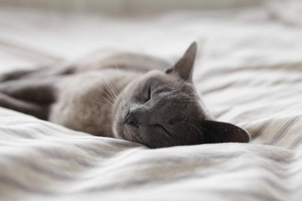 Getting A Good Sleep