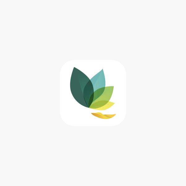 Oak meditation logo