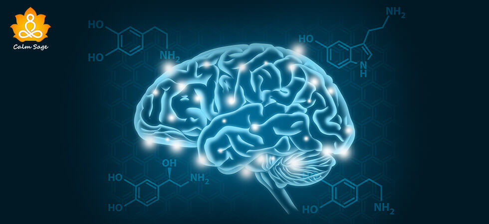 What-Is-The-Role-Of-Dopamine-In-Consciousness